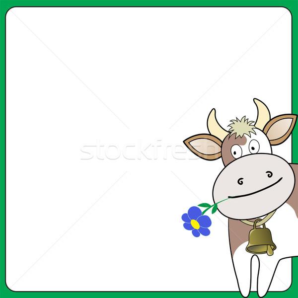 Koe witte vierkante bloem uit Stockfoto © Oksvik
