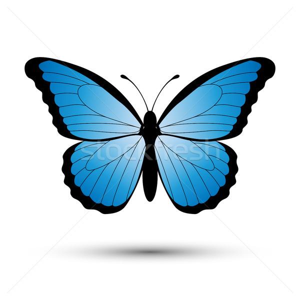 Сток-фото: синий · бабочка · изолированный · белый · весны · свет