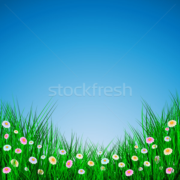 Green Grass with flowers on blue background, Vector Illustration Stock photo © olehsvetiukha
