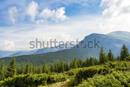 мнение горные пейзаж трава лес природы Сток-фото © OleksandrO