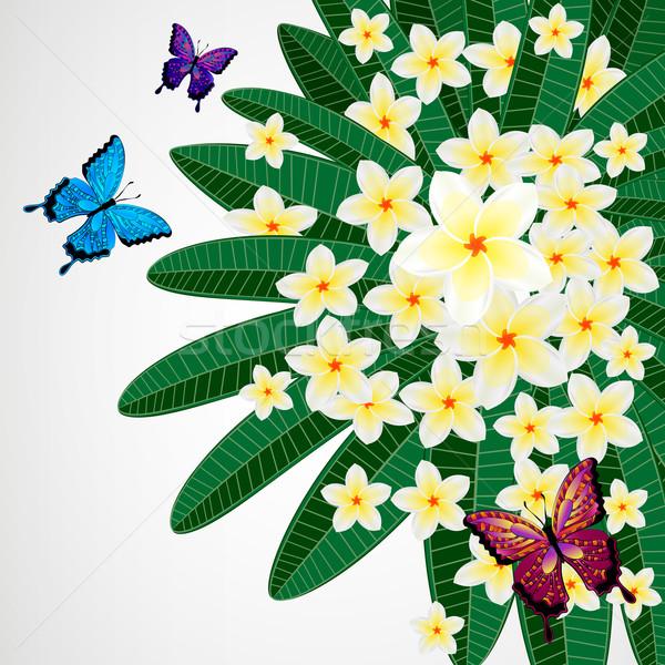 Eps10 dizayn çiçekler kelebekler kelebek Stok fotoğraf © OlgaYakovenko