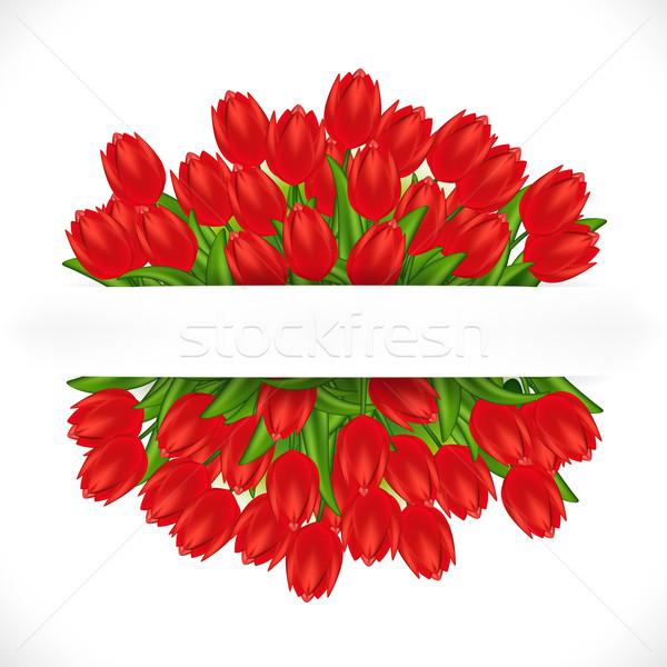 Kırmızı lale eğim çiçek bahar doğa Stok fotoğraf © OlgaYakovenko