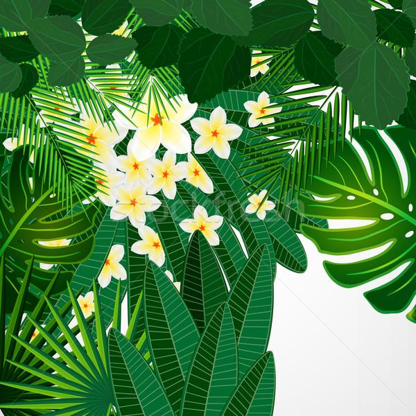 Eps10 floral design fleurs tropicales laisse Photo stock © OlgaYakovenko