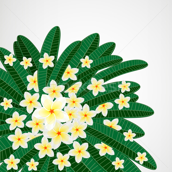 Eps10 цветочный дизайна весны фон красоту Сток-фото © OlgaYakovenko