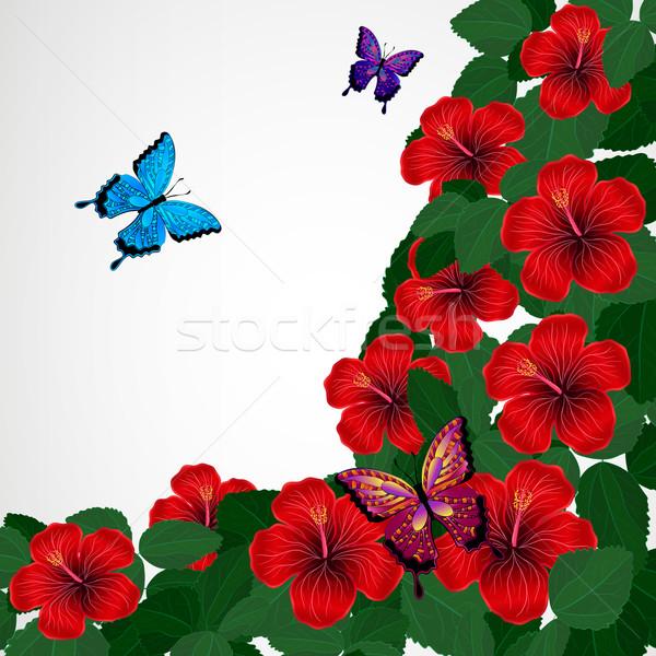 Floral design hibiscus fleurs papillons texture Photo stock © OlgaYakovenko