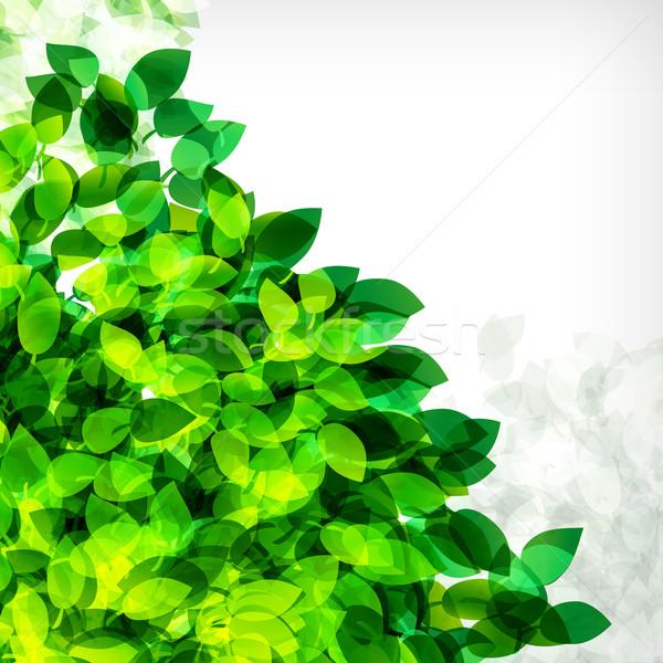 Frescos primavera follaje resumen vuelo hojas Foto stock © OlgaYakovenko