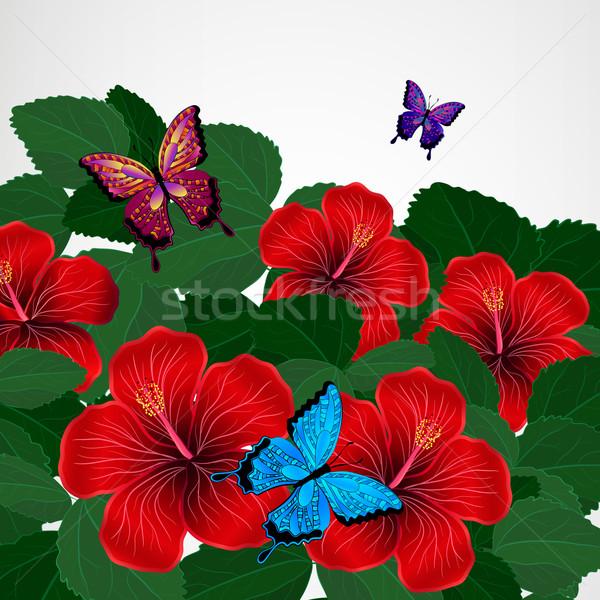Virágmintás terv hibiszkusz virágok pillangók textúra Stock fotó © OlgaYakovenko