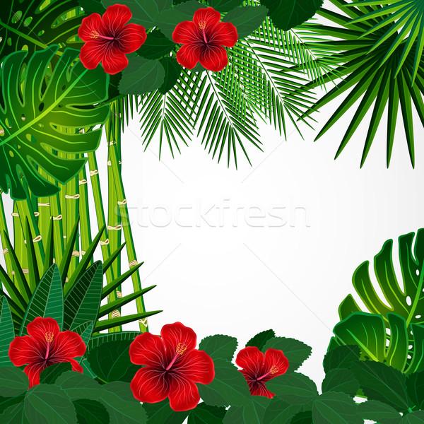 Tropical floral design background. Stock photo © OlgaYakovenko