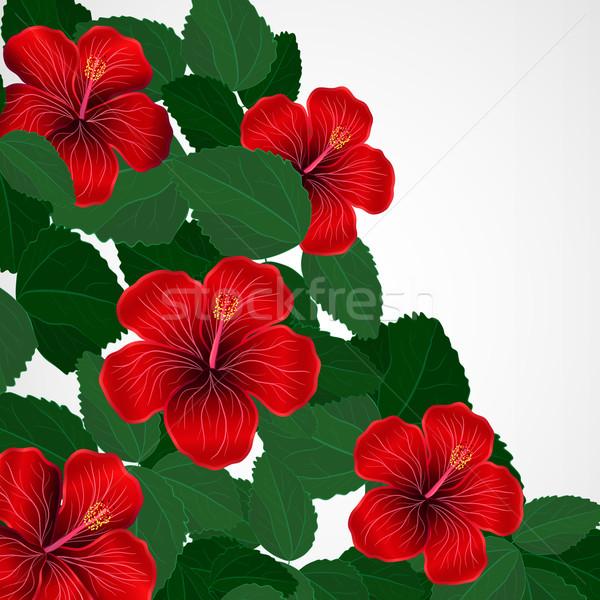Dizayn ebegümeci çiçekler doku soyut Stok fotoğraf © OlgaYakovenko