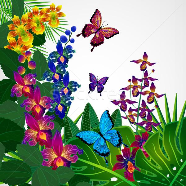 Dizayn tropikal orkide çiçekler yaprakları Stok fotoğraf © OlgaYakovenko