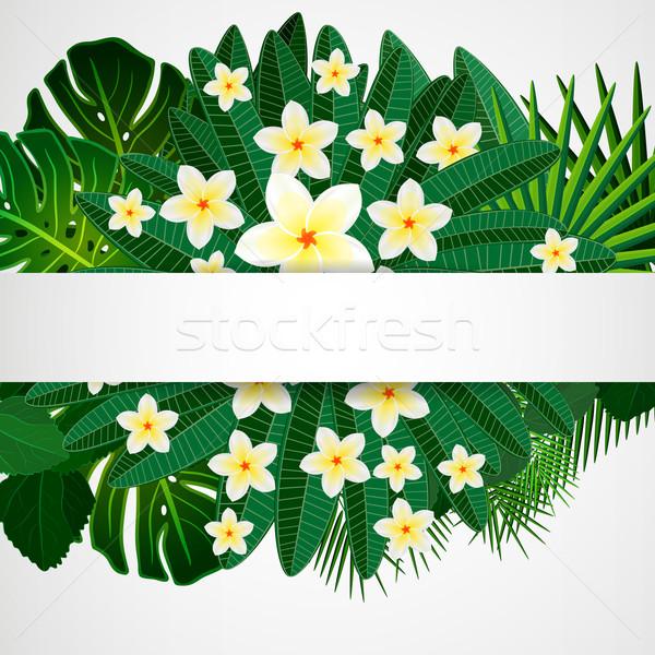 Eps10 dizayn çiçekler tropikal yaprakları Stok fotoğraf © OlgaYakovenko