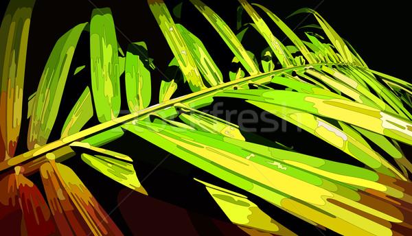 Palm Leaf Stock photo © oliopi