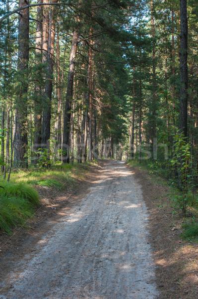 Forest summer road Stock photo © olira
