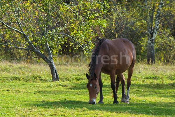 Horses in mountain ranch Stock photo © olira