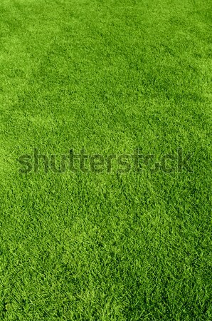 green grass texture Stock photo © olira