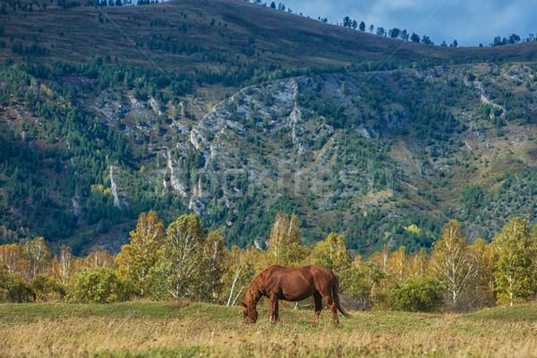 лошадей горные ранчо небе трава лес Сток-фото © olira