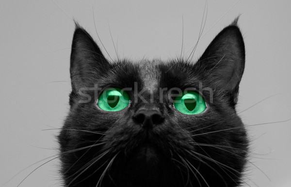 Gato preto procurar olho cara verde Foto stock © olira
