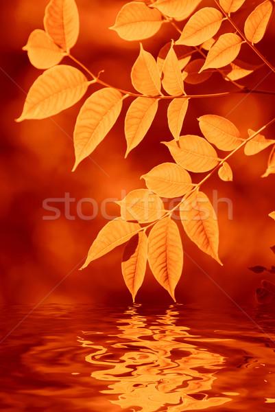 Eau peu profond accent forêt soleil Photo stock © olira