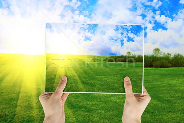 Verão mão foto campo grama verde Foto stock © olira