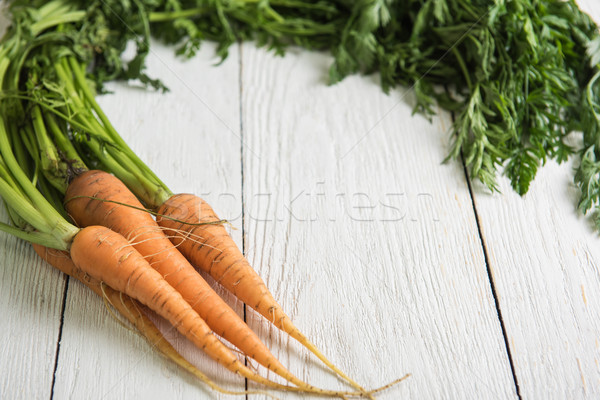 Freshly grown carrots Stock photo © olira