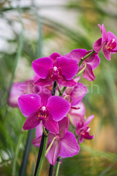 Photo stock: Orchidées · jardin · botanique · rose · printemps · fond · art