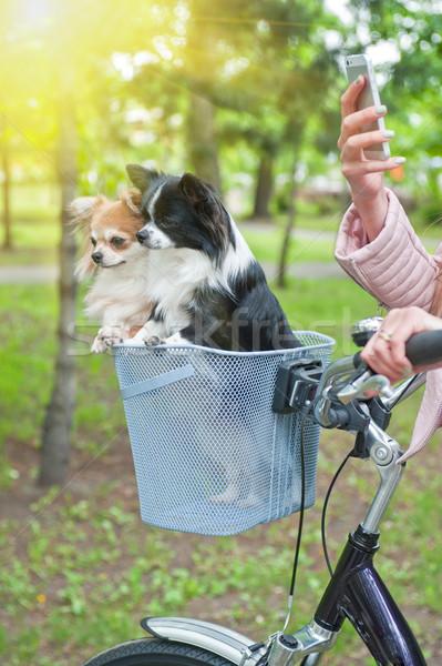 Stockfoto: Fiets · lopen · honden · vrouw · meisje · hond