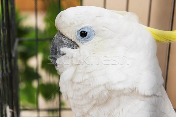 Groot witte papegaai portret boom Stockfoto © olira