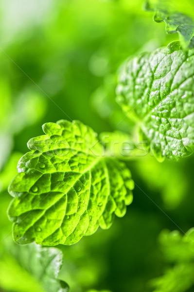 зеленый свежие листьев природы здоровья Сток-фото © olira
