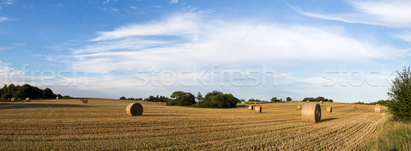 Fieno campo panoramica view campagna Danimarca Foto d'archivio © oliverfoerstner