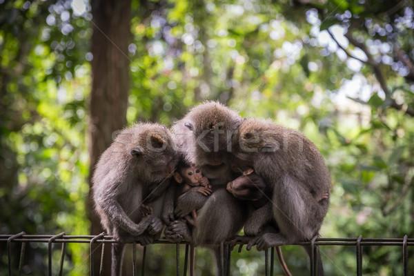 Stock photo: Monkey Family