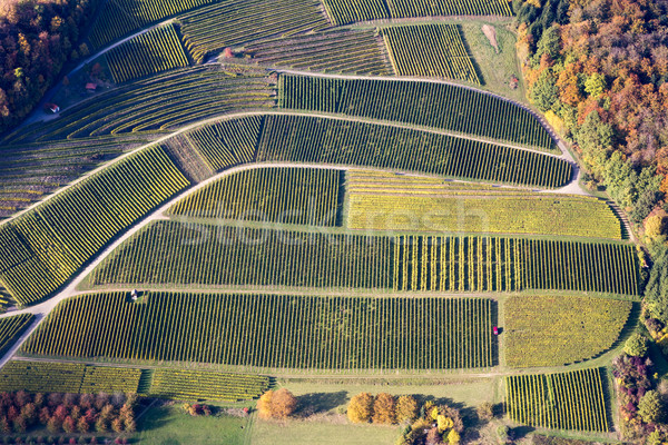 Stock photo: Aerial view of vineyards in Southern Germany