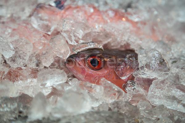 Single fish on ice for sale Stock photo © oliverfoerstner