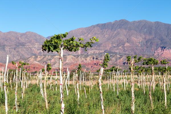 Szőlőskert Argentína gyönyörű hegyek régió bor Stock fotó © oliverfoerstner