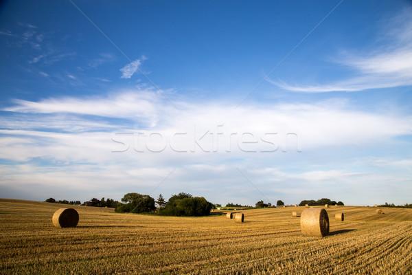 Széna mező panorámakép kilátás vidék Dánia Stock fotó © oliverfoerstner