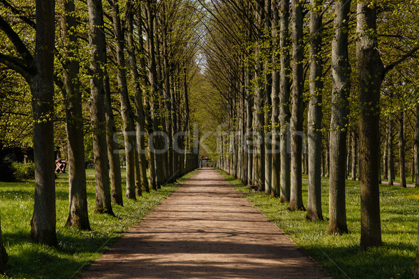 Francese giardino fotografia vicolo alberi Foto d'archivio © oliverfoerstner