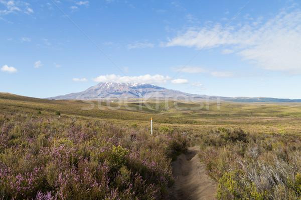 View of Mount Ruapehu Stock photo © oliverfoerstner