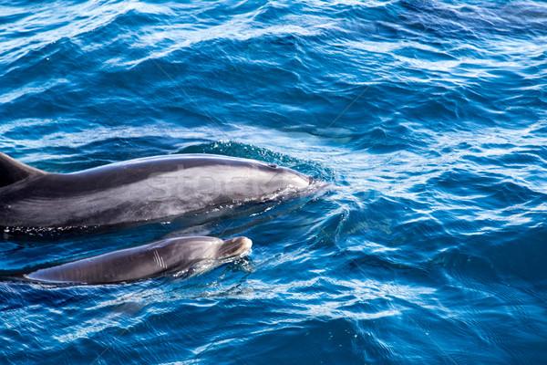 дельфины матери ребенка дельфин плаванию Сток-фото © oliverfoerstner
