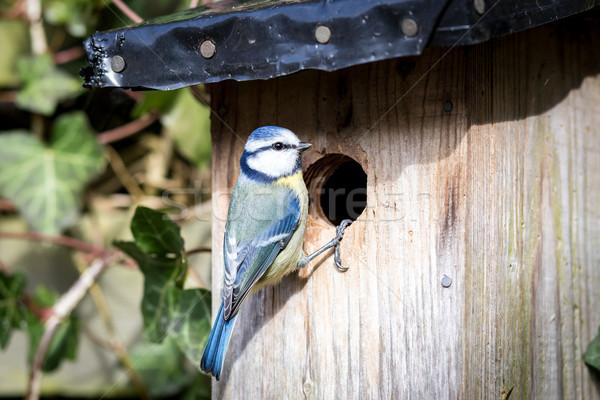 Azul teta comida natureza pássaro Foto stock © oliverfoerstner