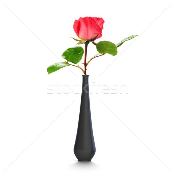 Une rose noir vase blanche Photo stock © olivier_le_moal