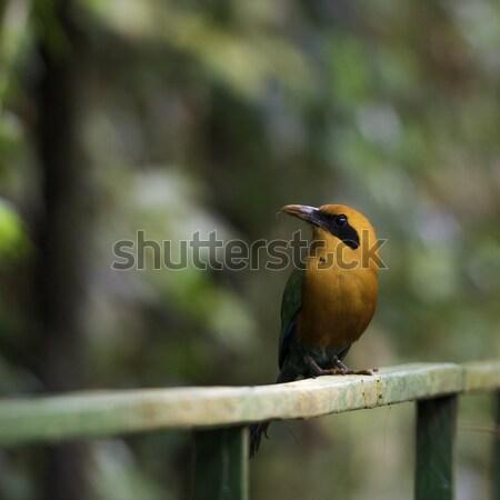Faune Costa Rica tropicales oiseau vert bleu Photo stock © olivier_le_moal