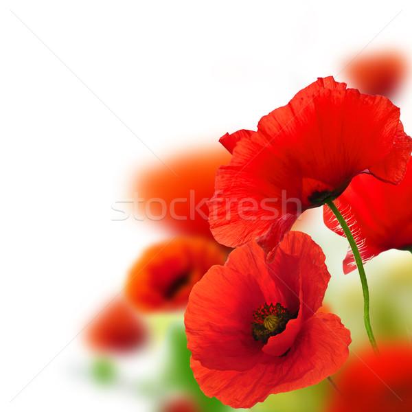 Coquelicots fleurs cadre blanche vert rouge Photo stock © olivier_le_moal