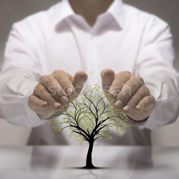 Környezeti védelem kettő kezek fölött fa Stock fotó © olivier_le_moal