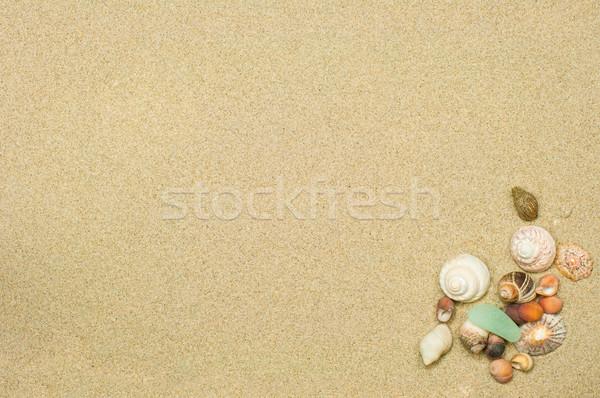 Kagylók homok szoba szöveg tengerpart természet Stock fotó © olivier_le_moal