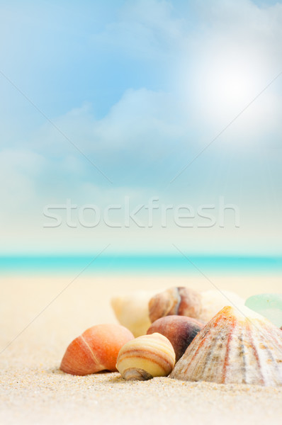 French Beach and Shells - Close Up Stock photo © olivier_le_moal