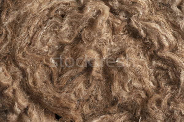 Insulation Materials - Glass Wool Detail Stock photo © olivier_le_moal