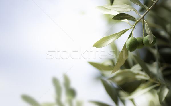 Olijfboom horizontaal afbeelding gratis ruimte achtergrond Stockfoto © olivier_le_moal