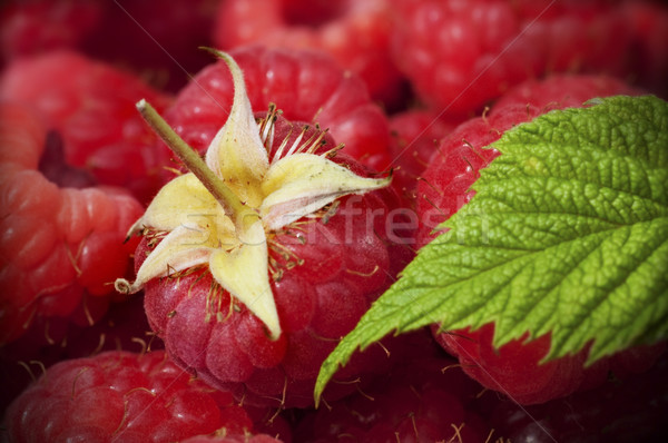 close up of raspberries Stock photo © olivier_le_moal