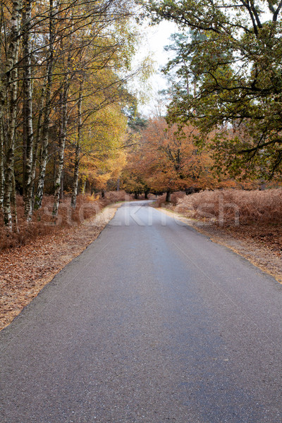 Yol orman yeni sonbahar güney İngiltere Stok fotoğraf © ollietaylorphotograp