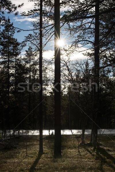 Арктика круга Финляндия север лес звезды Сток-фото © ollietaylorphotograp