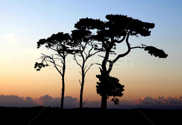 Ağaçlar gün batımı manzara gökyüzü bulutlar bahar Stok fotoğraf © ollietaylorphotograp